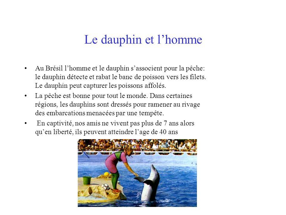 Le dauphin et lhomme Au Brésil lhomme et le dauphin sassocient pour la pêche: le dauphin détecte et rabat le banc de poisson vers les filets. Le dauph