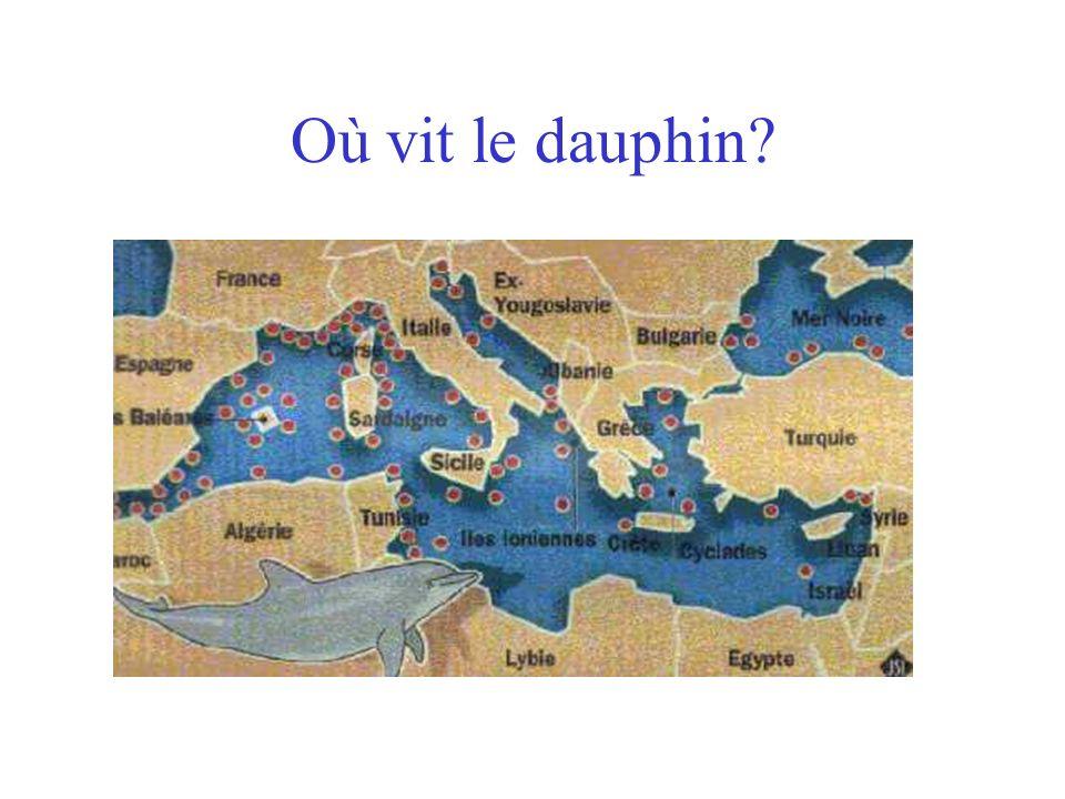 Où vit le dauphin?