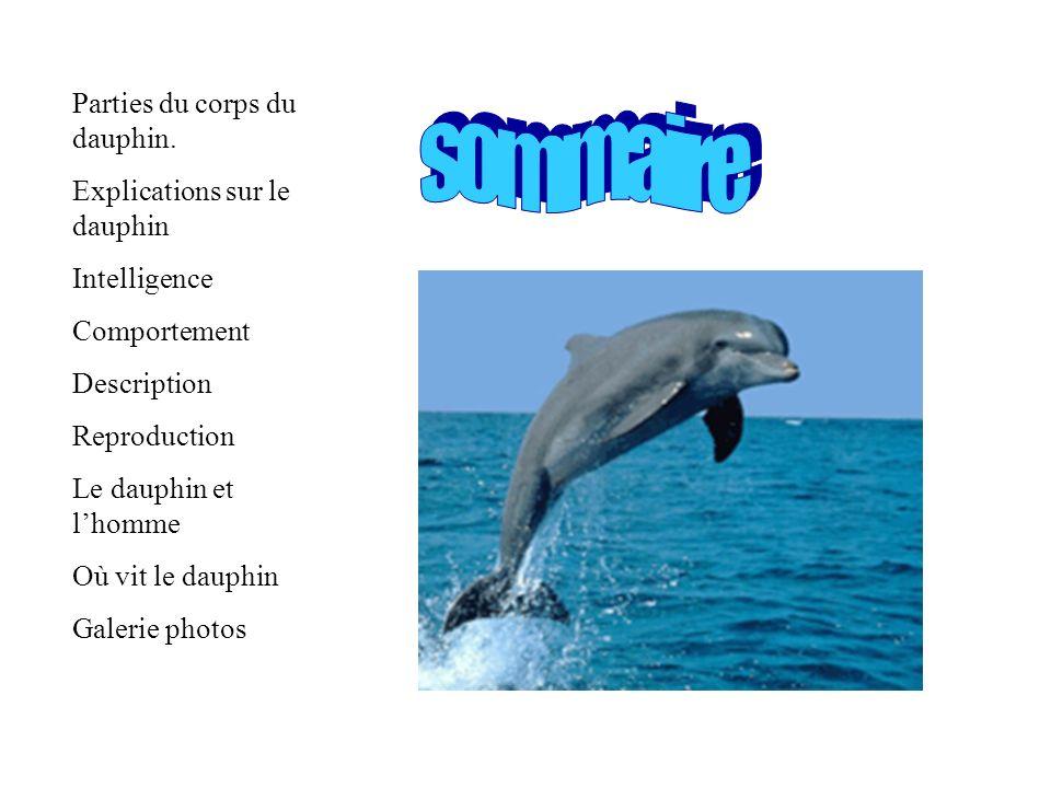 Parties du corps du dauphin. Explications sur le dauphin Intelligence Comportement Description Reproduction Le dauphin et lhomme Où vit le dauphin Gal