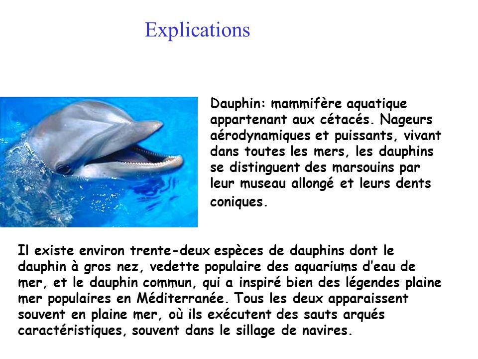 Dauphin: mammifère aquatique appartenant aux cétacés. Nageurs aérodynamiques et puissants, vivant dans toutes les mers, les dauphins se distinguent de