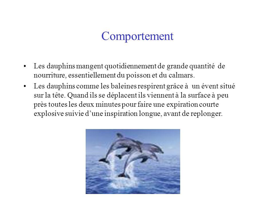 Comportement Les dauphins mangent quotidiennement de grande quantité de nourriture, essentiellement du poisson et du calmars. Les dauphins comme les b