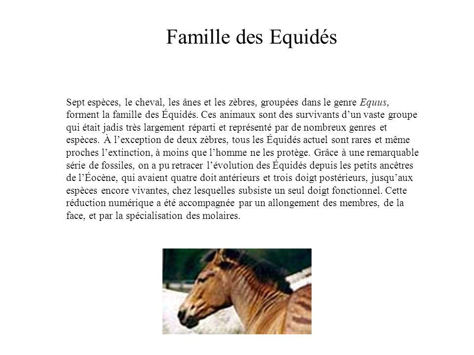 Famille des Equidés Sept espèces, le cheval, les ânes et les zèbres, groupées dans le genre Equus, forment la famille des Équidés. Ces animaux sont de