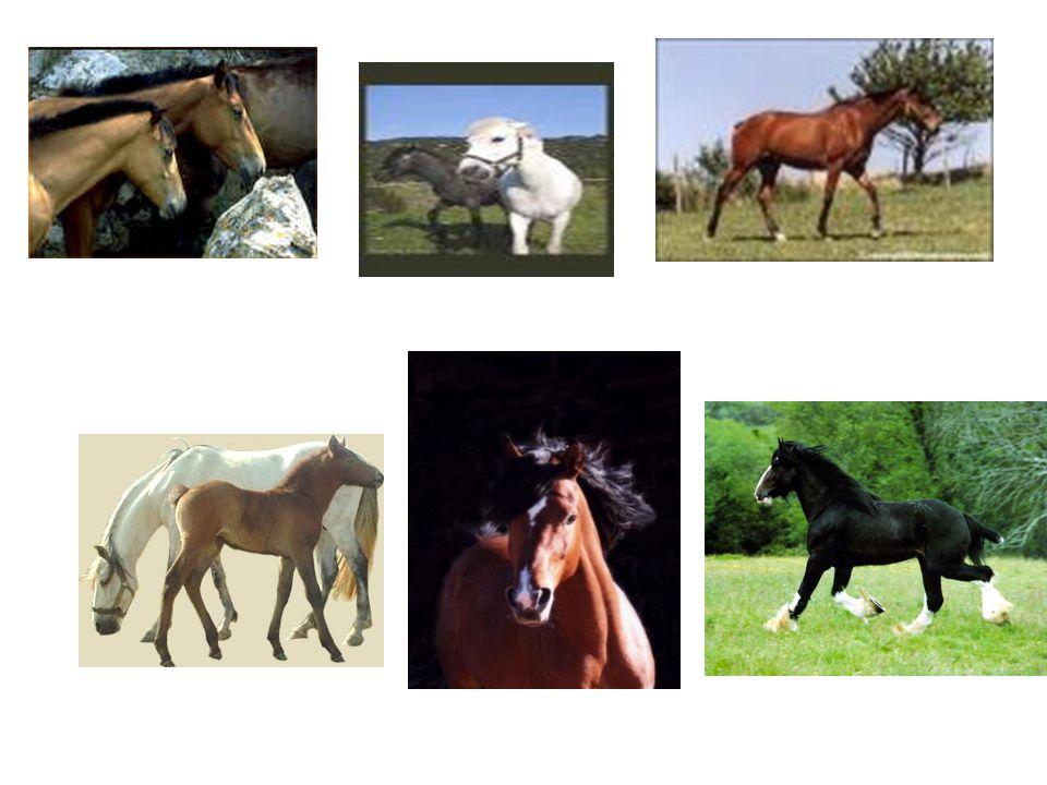 Bibliographie Jaime bien le cheval car il peut nous porter sur le dos.