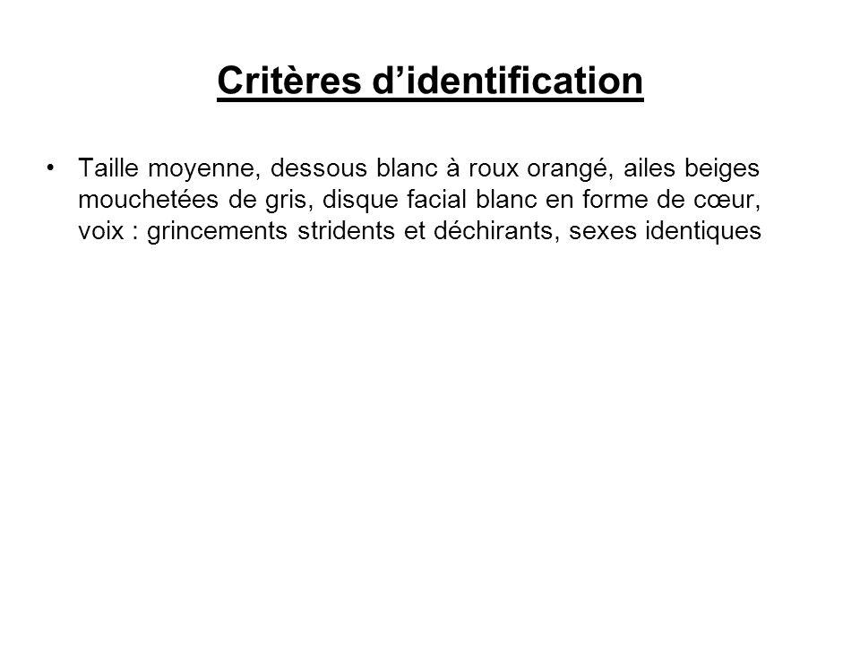 Critères didentification Taille moyenne, dessous blanc à roux orangé, ailes beiges mouchetées de gris, disque facial blanc en forme de cœur, voix : gr