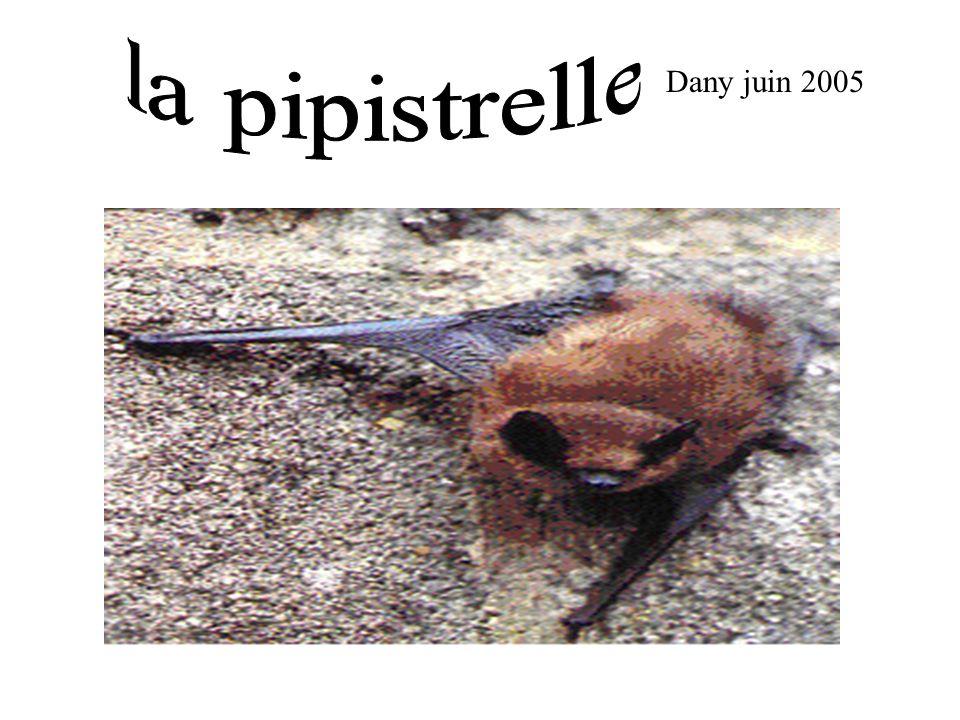 Dany juin 2005