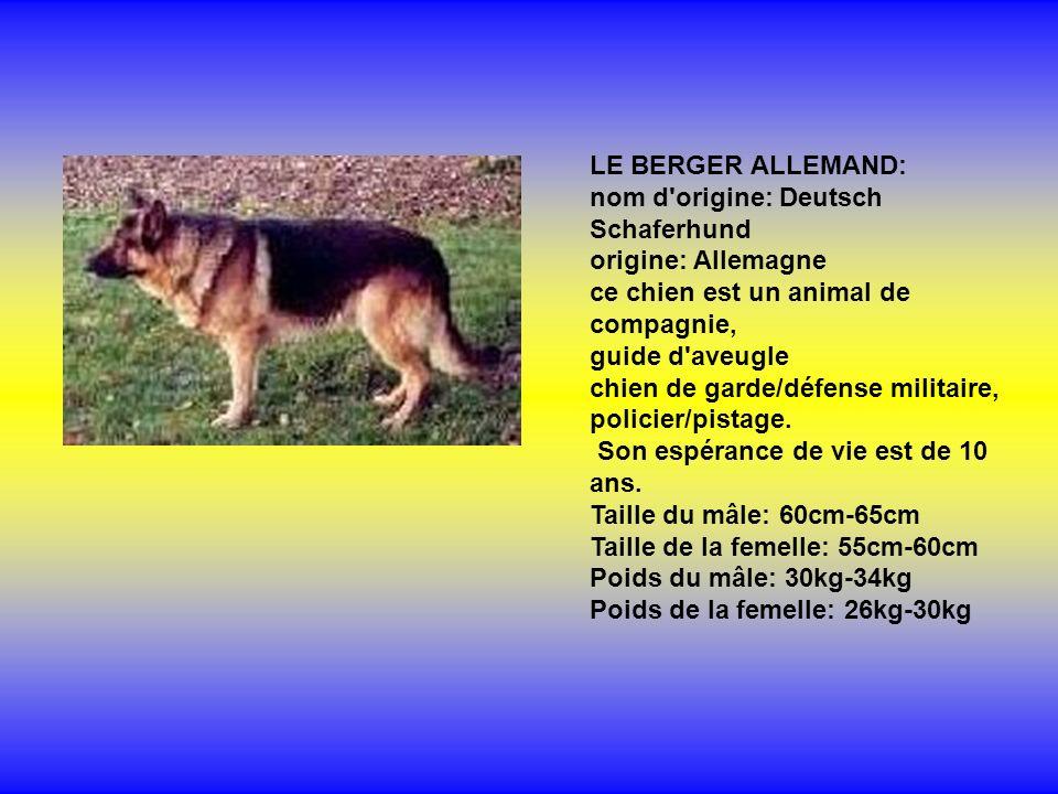 LE BERGER ALLEMAND: nom d'origine: Deutsch Schaferhund origine: Allemagne ce chien est un animal de compagnie, guide d'aveugle chien de garde/défense