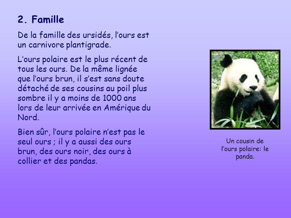 2. Famille De la famille des ursidés, lours est un carnivore plantigrade. Lours polaire est le plus récent de tous les ours. De la même lignée que lou