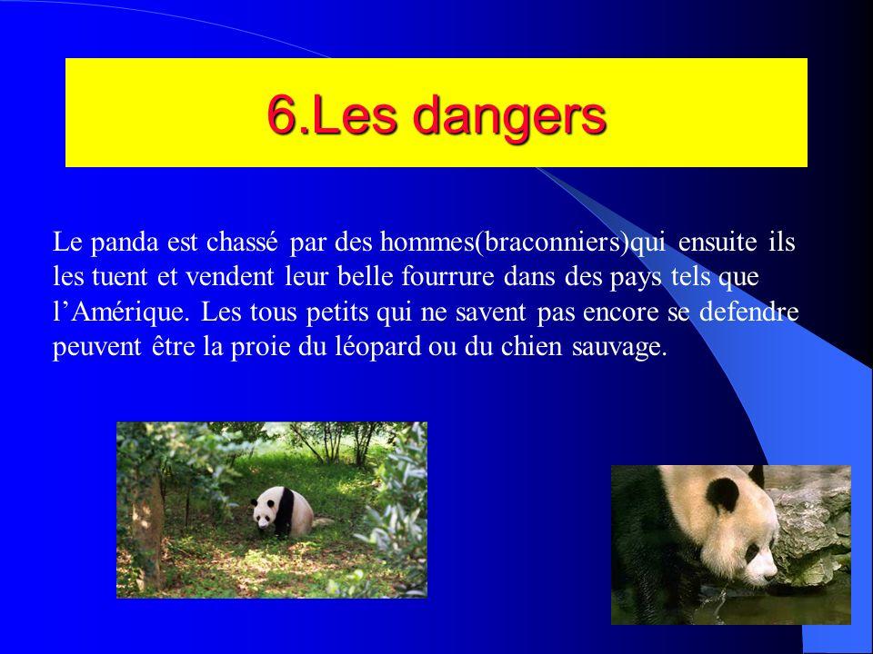 5.Le bébé Panda De un à trois jeunes minuscules naissent, dans un état de développement très peu avancé. Ils pèsent d3e 90 à 130 grammes, ce qui laiss