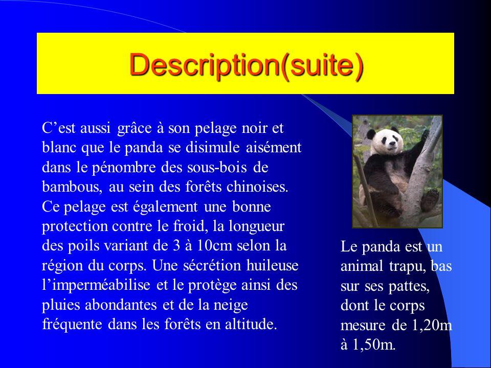 1. Description: Le panda est avant tout un très beau animal et pas violent. Grâce à sa coloration contrastée, sa fourrure blanche et noire autour de s