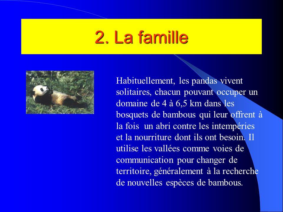 Le portrait du panda Nom: Ailuropoda melanoleuca Famille: ursidés Ordre: carnivores Taille: de 1,20 à 1,50m(tête et corps) Poids: de 75 à 160 kg pour