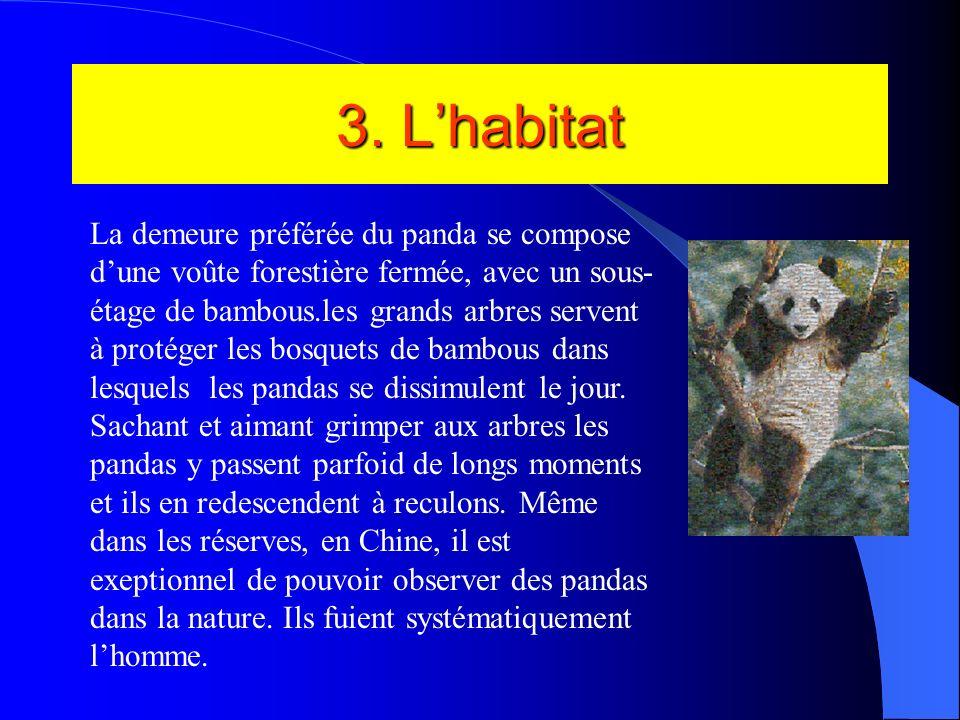 2. La famille Habituellement, les pandas vivent solitaires, chacun pouvant occuper un domaine de 4 à 6,5 km dans les bosquets de bambous qui leur offr