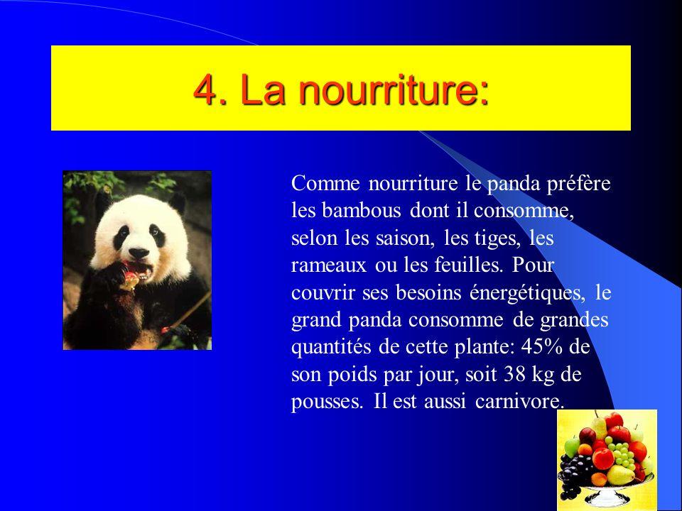 3. Lhabitat La demeure préférée du panda se compose dune voûte forestière fermée, avec un sous- étage de bambous.les grands arbres servent à protéger