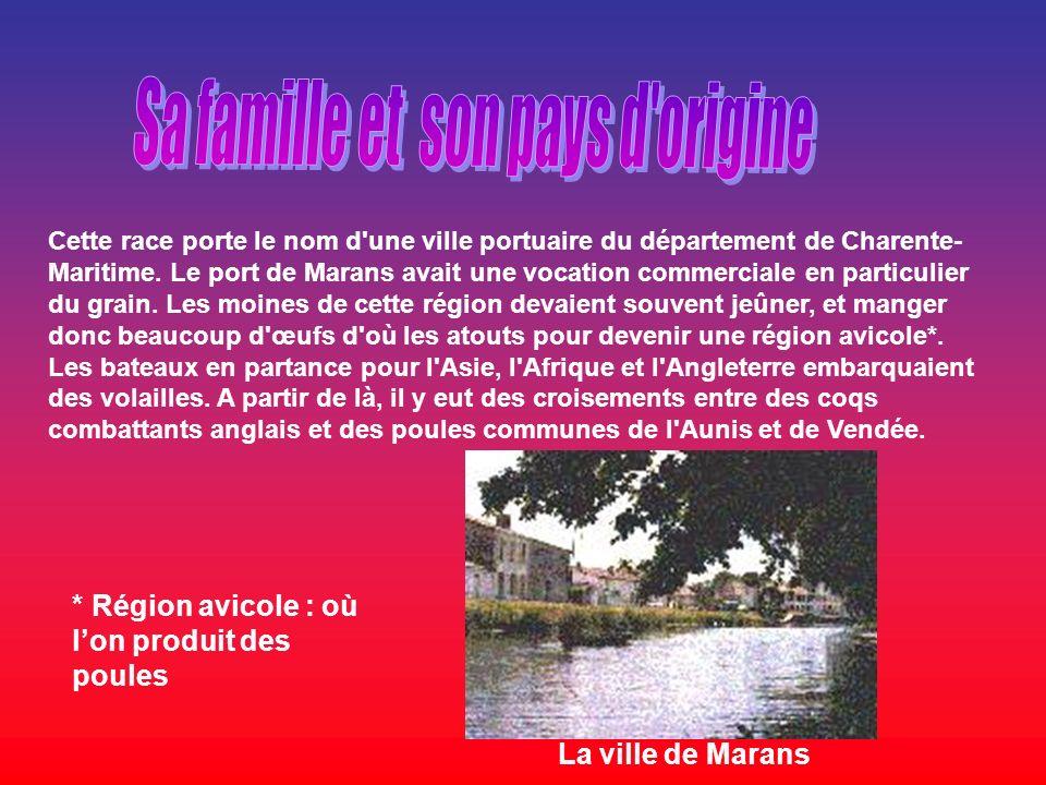 Cette race porte le nom d'une ville portuaire du département de Charente- Maritime. Le port de Marans avait une vocation commerciale en particulier du
