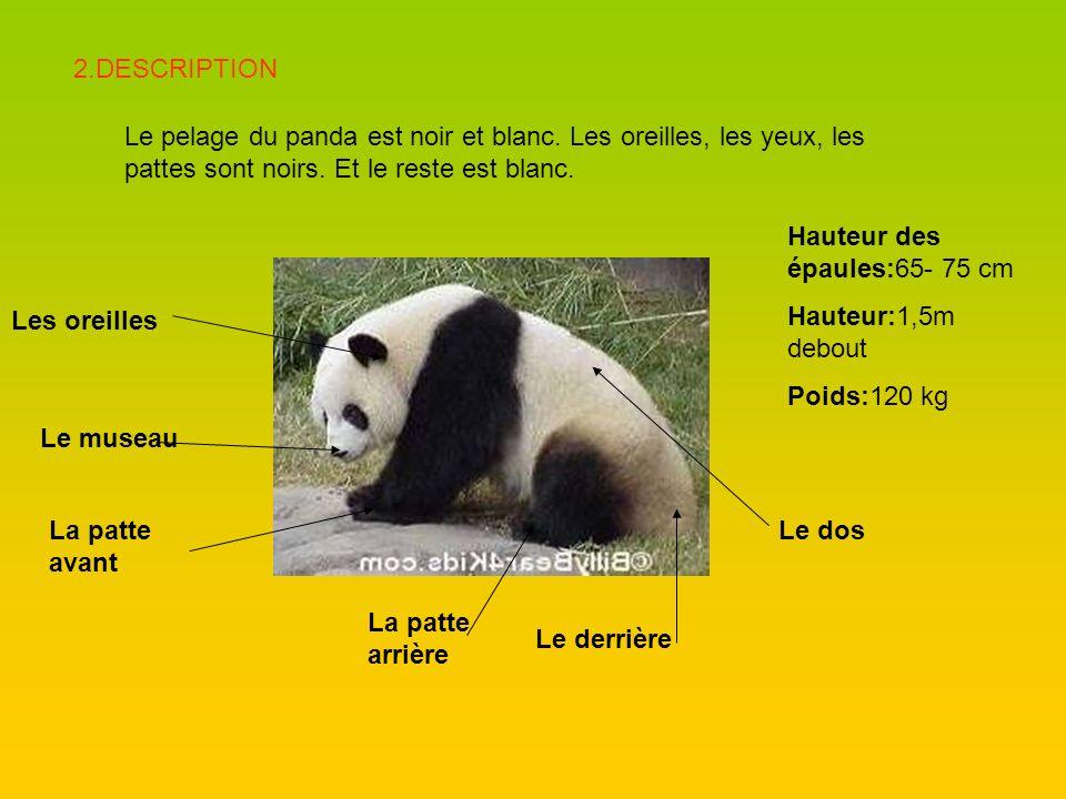 Le museau La patte avant La patte arrière Le derrière Les oreilles Le dos 2.DESCRIPTION Le pelage du panda est noir et blanc. Les oreilles, les yeux,