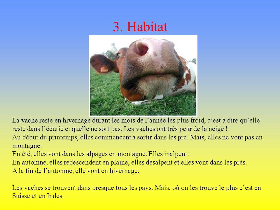 2. Famille La vache est un mammifère, plus précisément elle fait partie des ruminants. La vache na dans son ventre quun seul petit par an. Elle est he