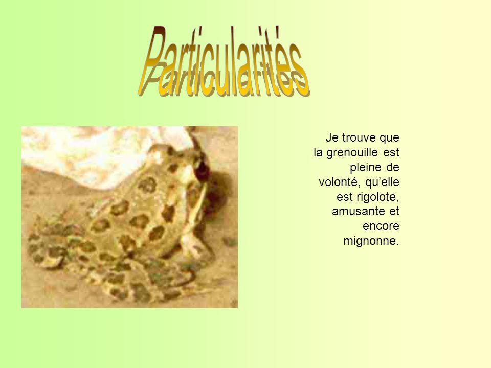 Je trouve que la grenouille est pleine de volonté, quelle est rigolote, amusante et encore mignonne.