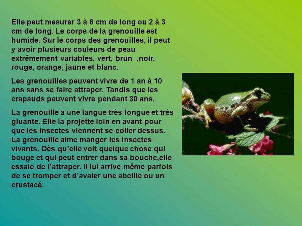 Elle peut mesurer 3 à 8 cm de long ou 2 à 3 cm de long. Le corps de la grenouille est humide. Sur le corps des grenouilles, il peut y avoir plusieurs