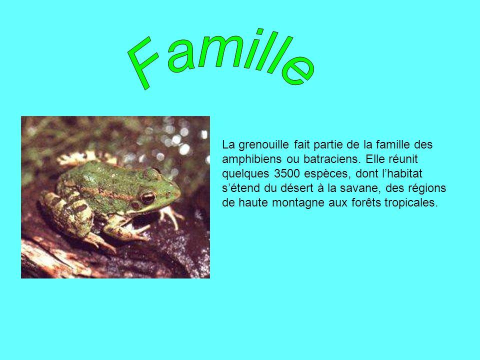 La grenouille fait partie de la famille des amphibiens ou batraciens. Elle réunit quelques 3500 espèces, dont lhabitat sétend du désert à la savane, d