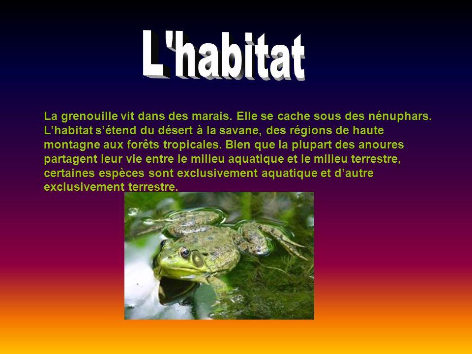 La grenouille vit dans des marais. Elle se cache sous des nénuphars. Lhabitat sétend du désert à la savane, des régions de haute montagne aux forêts t