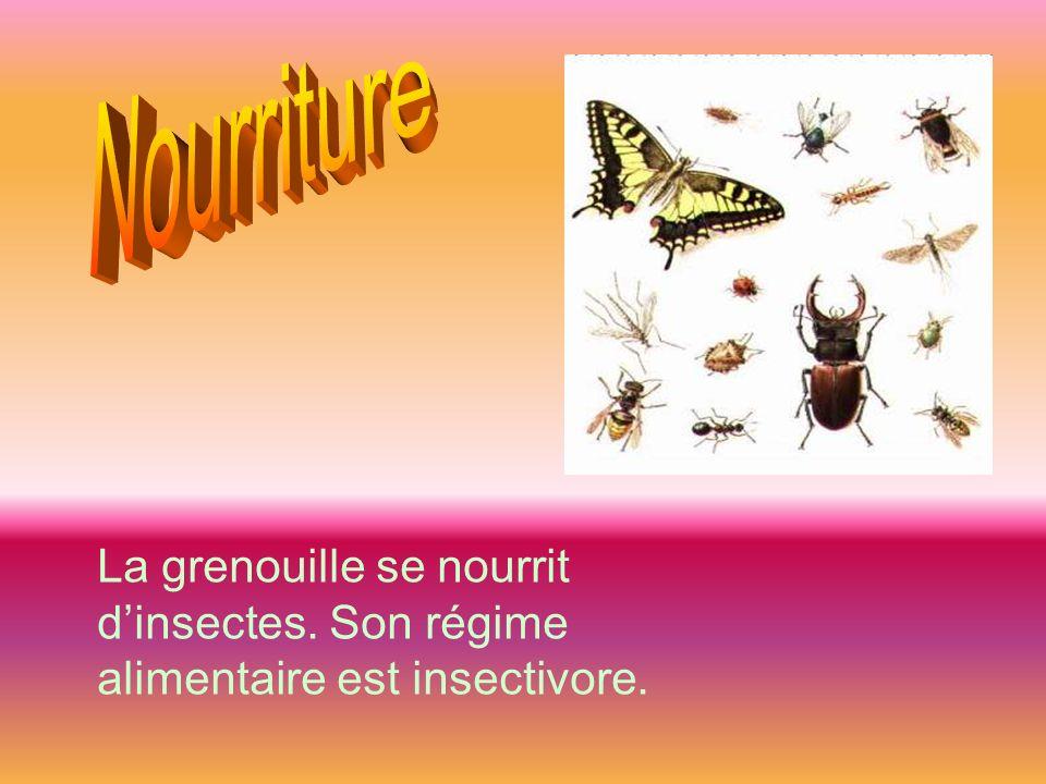 La grenouille se nourrit dinsectes. Son régime alimentaire est insectivore.