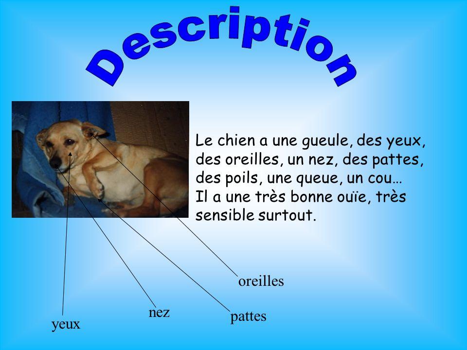 Le chien a une gueule, des yeux, des oreilles, un nez, des pattes, des poils, une queue, un cou… Il a une très bonne ouïe, très sensible surtout. orei