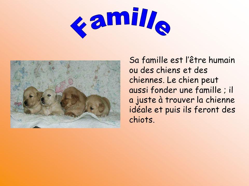 Sa famille est lêtre humain ou des chiens et des chiennes. Le chien peut aussi fonder une famille ; il a juste à trouver la chienne idéale et puis ils