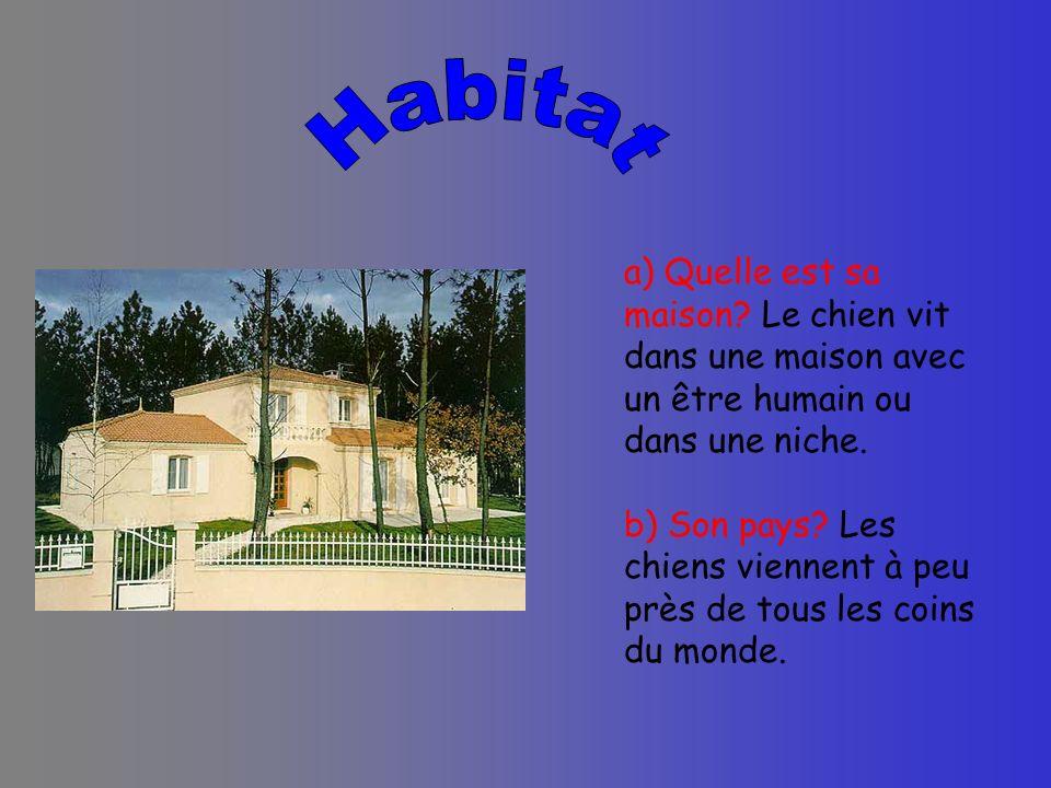 a) Quelle est sa maison? Le chien vit dans une maison avec un être humain ou dans une niche. b) Son pays? Les chiens viennent à peu près de tous les c