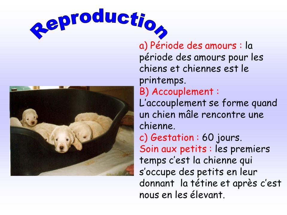 a) Période des amours : la période des amours pour les chiens et chiennes est le printemps. B) Accouplement : Laccouplement se forme quand un chien mâ
