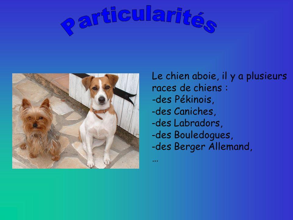 Le chien aboie, il y a plusieurs races de chiens : -des Pékinois, - des Caniches, - des Labradors, - des Bouledogues, - des Berger Allemand, …