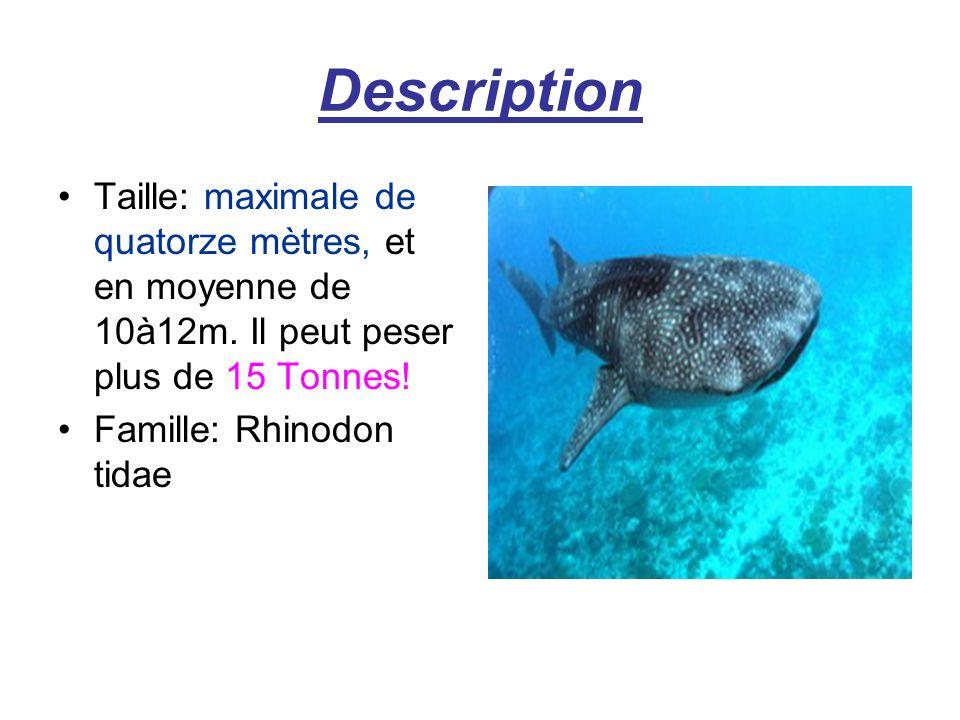 Description Taille: maximale de quatorze mètres, et en moyenne de 10à12m.