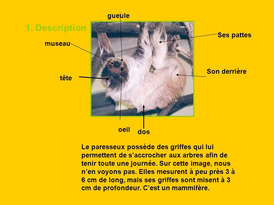 1. Description tête dos Son derrière Ses pattes gueule oeil museau Le paresseux possède des griffes qui lui permettent de saccrocher aux arbres afin d