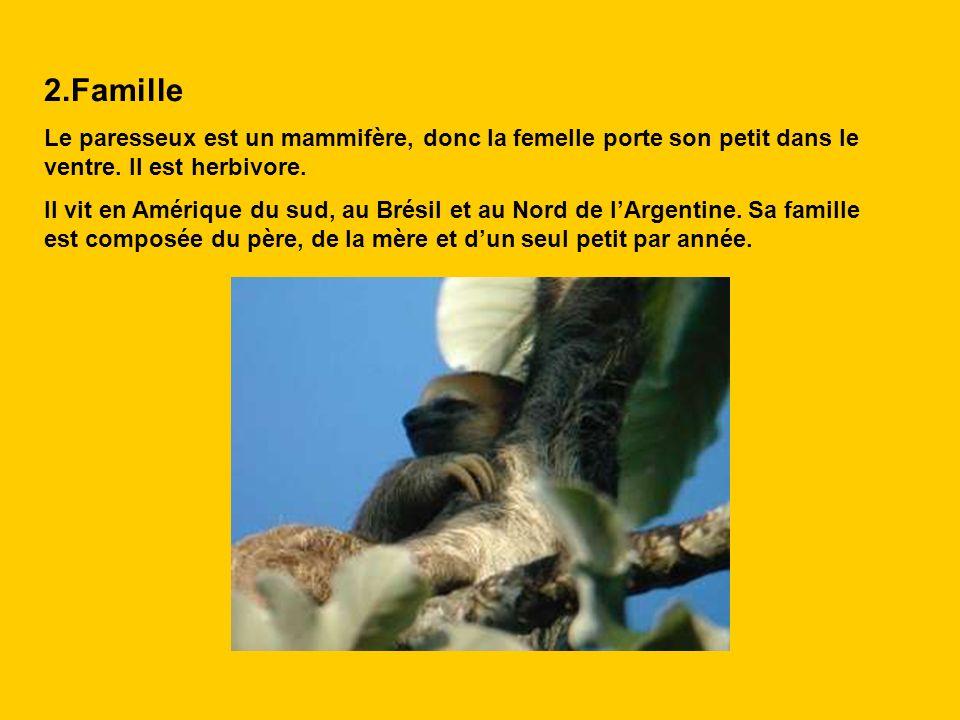 2.Famille Le paresseux est un mammifère, donc la femelle porte son petit dans le ventre. Il est herbivore. Il vit en Amérique du sud, au Brésil et au