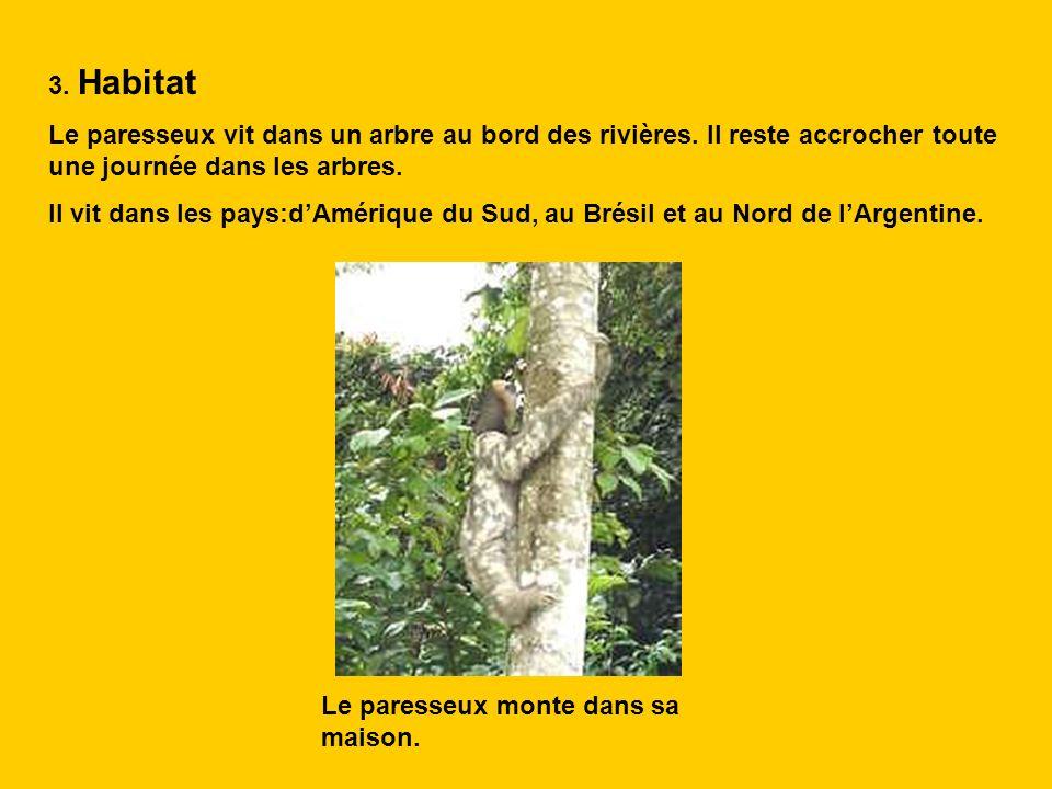 3. Habitat Le paresseux vit dans un arbre au bord des rivières. Il reste accrocher toute une journée dans les arbres. Il vit dans les pays:dAmérique d