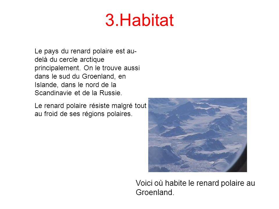 3.Habitat Le pays du renard polaire est au- delà du cercle arctique principalement. On le trouve aussi dans le sud du Groenland, en Islande, dans le n