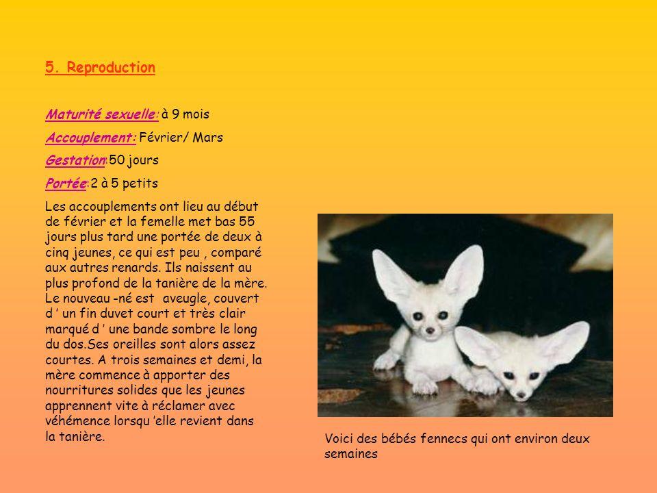 5. Reproduction Maturité sexuelle: à 9 mois Accouplement: Février/ Mars Gestation:50 jours Portée:2 à 5 petits Les accouplements ont lieu au début de