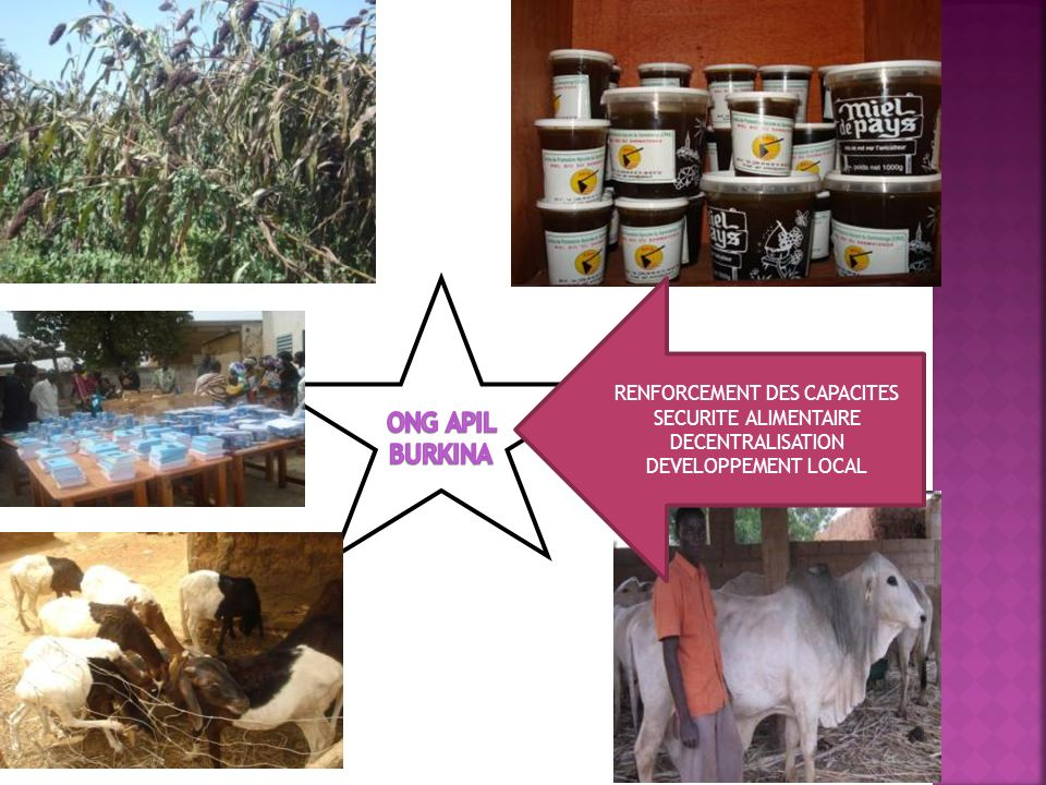 RENFORCEMENT DES CAPACITES SECURITE ALIMENTAIRE DECENTRALISATION DEVELOPPEMENT LOCAL