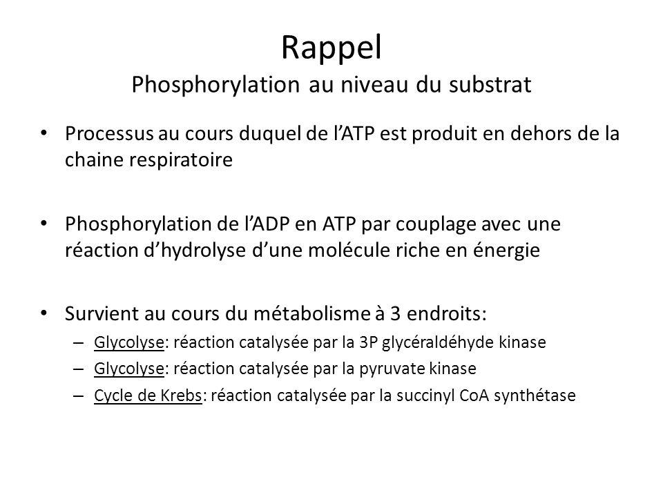 Rappel Phosphorylation au niveau du substrat Processus au cours duquel de lATP est produit en dehors de la chaine respiratoire Phosphorylation de lADP