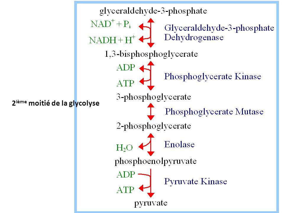 2 ième moitié de la glycolyse