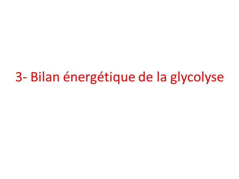 3- Bilan énergétique de la glycolyse