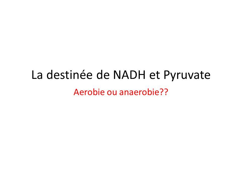 La destinée de NADH et Pyruvate Aerobie ou anaerobie??