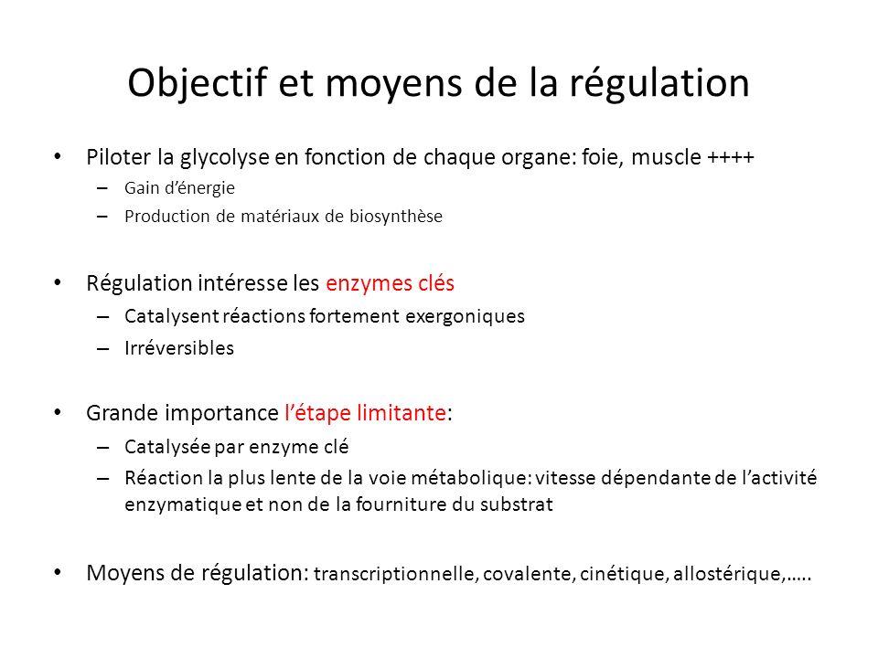 Objectif et moyens de la régulation Piloter la glycolyse en fonction de chaque organe: foie, muscle ++++ – Gain dénergie – Production de matériaux de