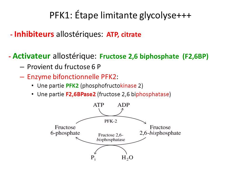 PFK1: Étape limitante glycolyse+++ - Inhibiteurs allostériques: ATP, citrate - Activateur allostérique: Fructose 2,6 biphosphate (F2,6BP) – Provient d