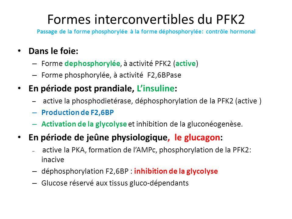 Formes interconvertibles du PFK2 Passage de la forme phosphorylée à la forme déphosphorylée: contrôle hormonal Dans le foie: – Forme dephosphorylée, à
