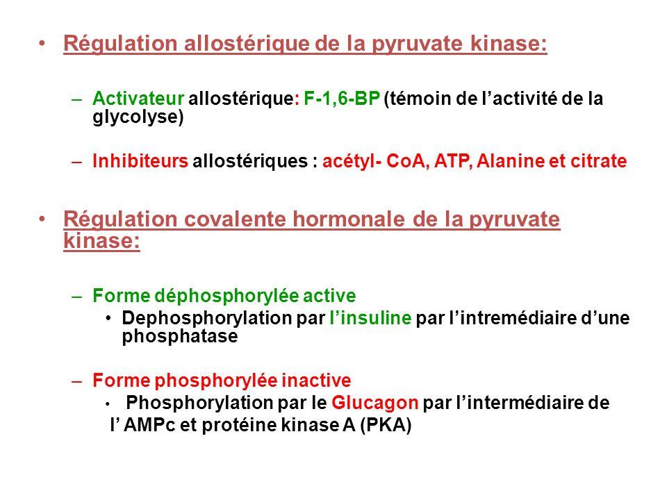 Régulation allostérique de la pyruvate kinase: –Activateur allostérique: F-1,6-BP (témoin de lactivité de la glycolyse) –Inhibiteurs allostériques : a