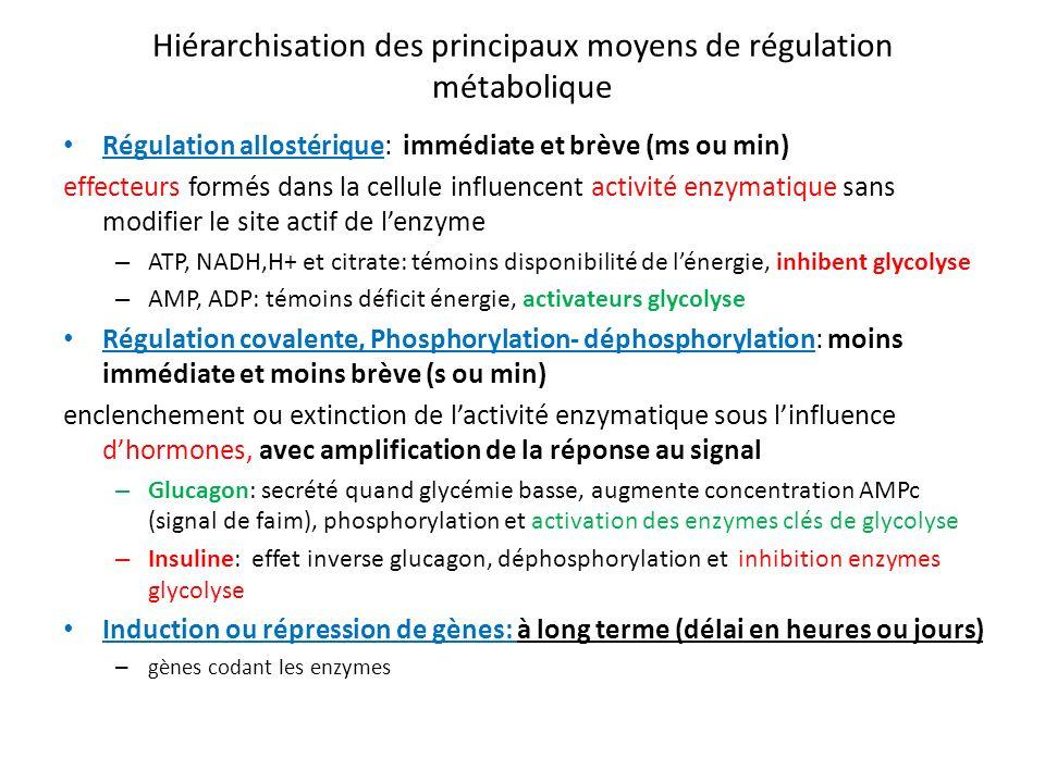Hiérarchisation des principaux moyens de régulation métabolique Régulation allostérique: immédiate et brève (ms ou min) effecteurs formés dans la cell