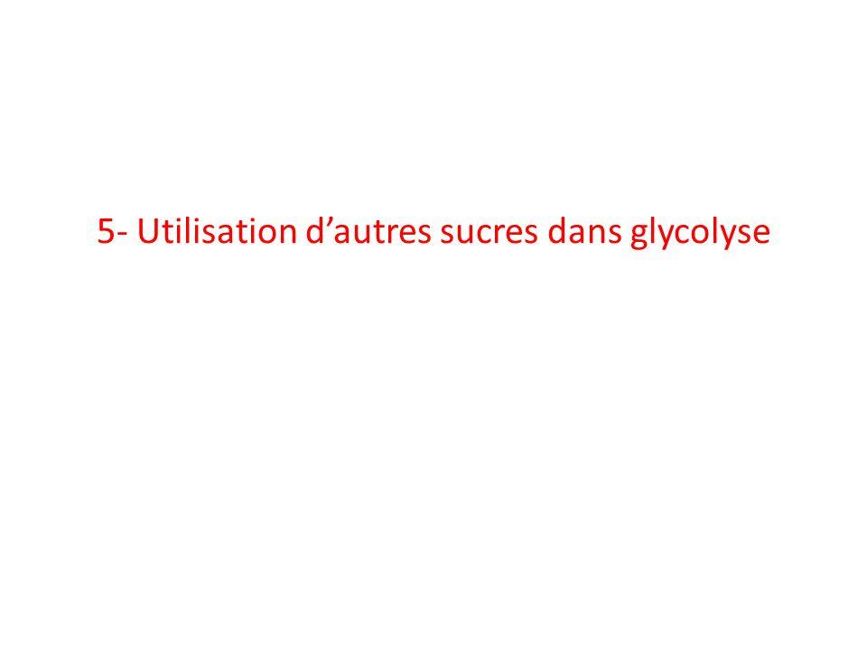 5- Utilisation dautres sucres dans glycolyse
