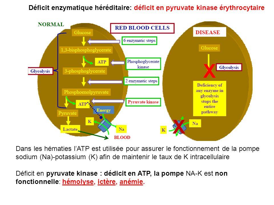 Dans les hématies lATP est utilisée pour assurer le fonctionnement de la pompe sodium (Na)-potassium (K) afin de maintenir le taux de K intracellulair