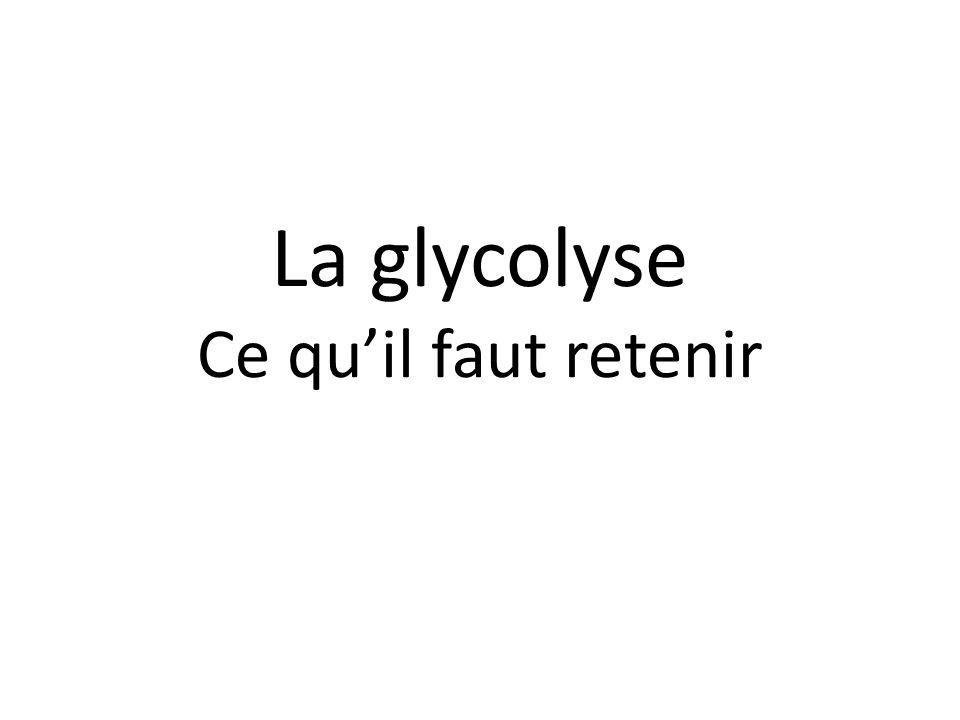La glycolyse Ce quil faut retenir
