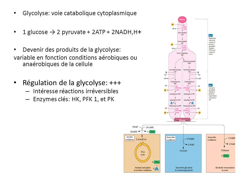 Glycolyse: voie catabolique cytoplasmique 1 glucose 2 pyruvate + 2ATP + 2NADH,H + Devenir des produits de la glycolyse: variable en fonction condition