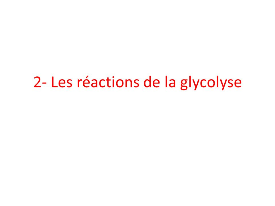 Glycolyse: voie catabolique cytoplasmique 1 glucose 2 pyruvate + 2ATP + 2NADH,H + Devenir des produits de la glycolyse: variable en fonction conditions aérobiques ou anaérobiques de la cellule Régulation de la glycolyse: +++ – Intéresse réactions irréversibles – Enzymes clés: HK, PFK 1, et PK